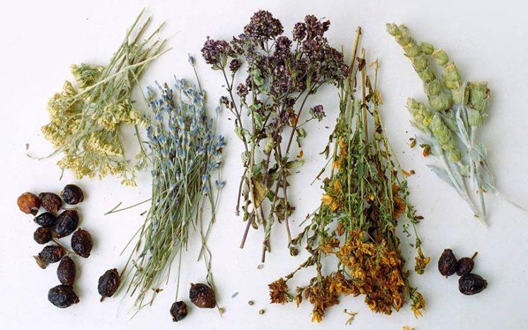 Очищение почек травами