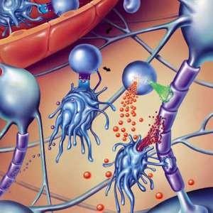 Лечение рассеянного склероза голоданием