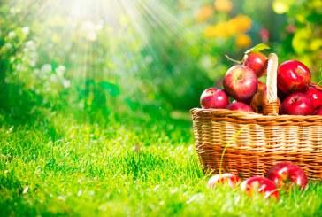 Яблочные диет для похудения и очищения организма
