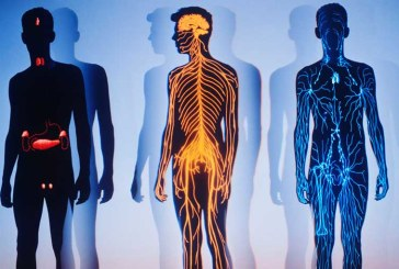 Строение и функции организма человека