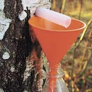 Березовый сок заготовка